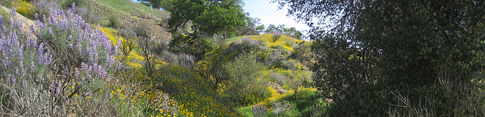 image - wildflowers at Stanislaus River Parks